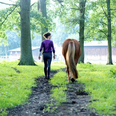 Jedes Pferd hat ein individuelles Training verdient