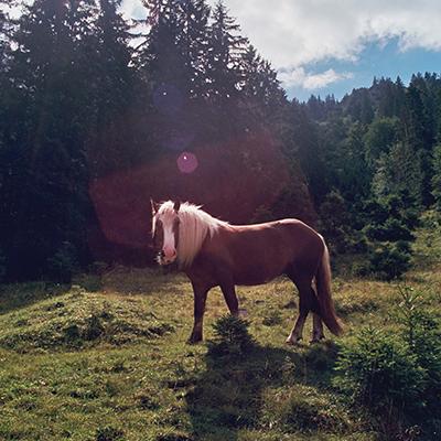 Reiten im Dialog – Pferd auf der Weide
