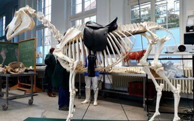 Meine Teilnahme am Leipziger Anatomiesymposium