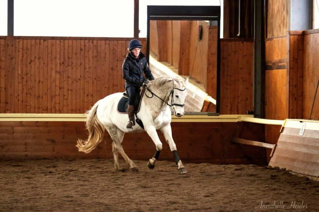 Das Pferd galoppiert mit mittlerer Aufrichtung.