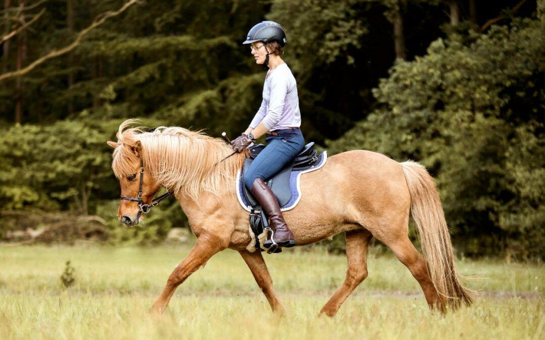 Schritte in der Ausbildung von Reiter und Pferd