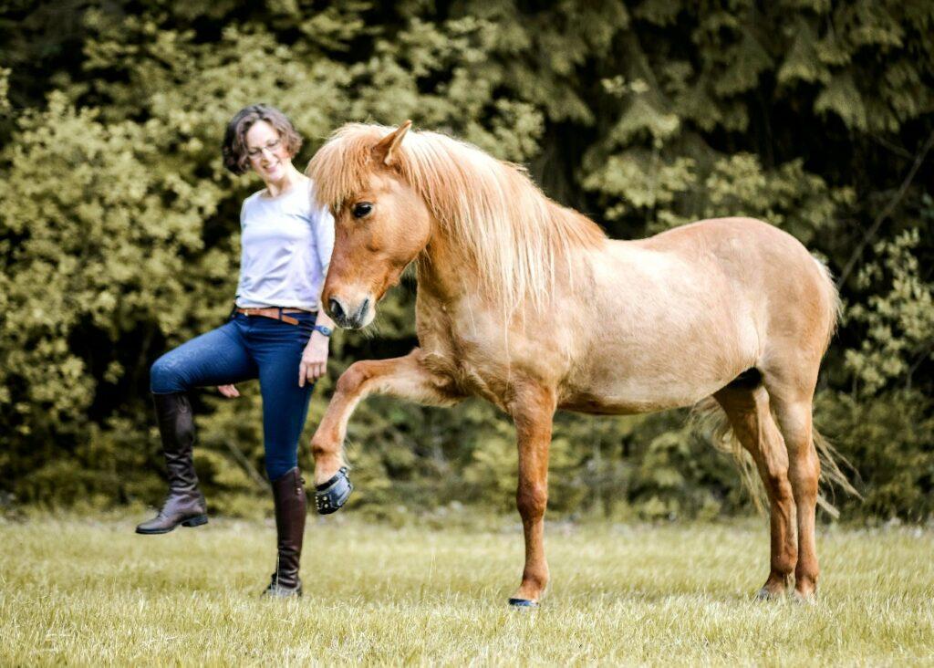 Das Islandpferd steht ganz frei ohne Zäumung auf der Wiese und kopiert im Spanischen Schritt die Körpersprache des Menschen.