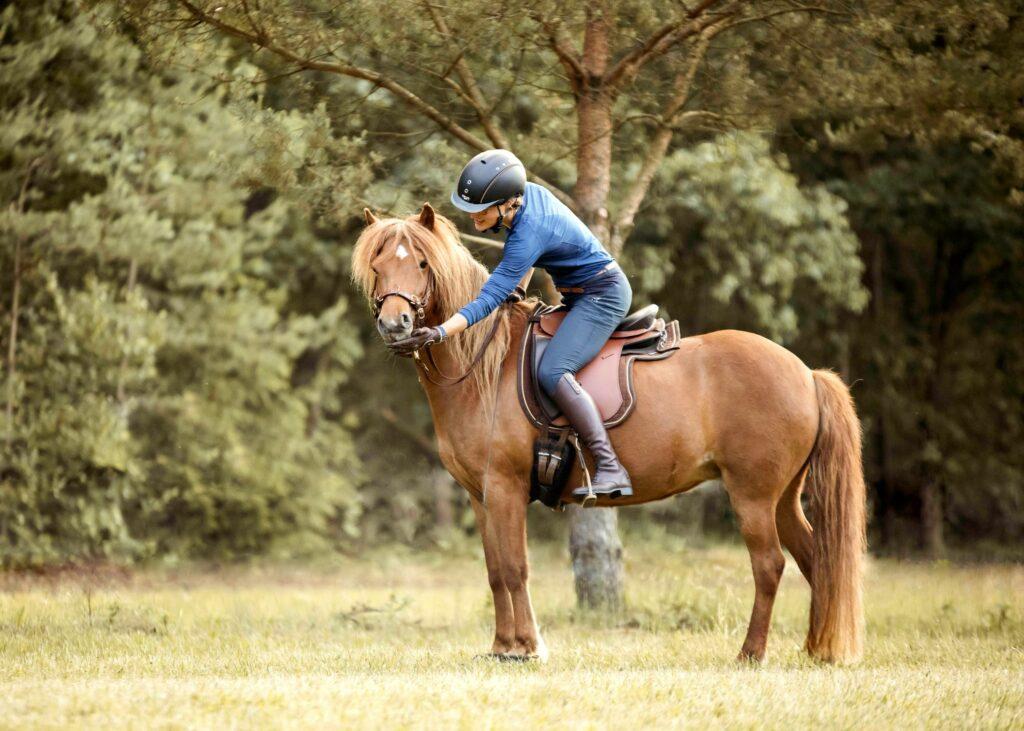 Nach dem Aufsteigen bekommt das juge Pferd viel Lob und auch mal ein Leckerli.