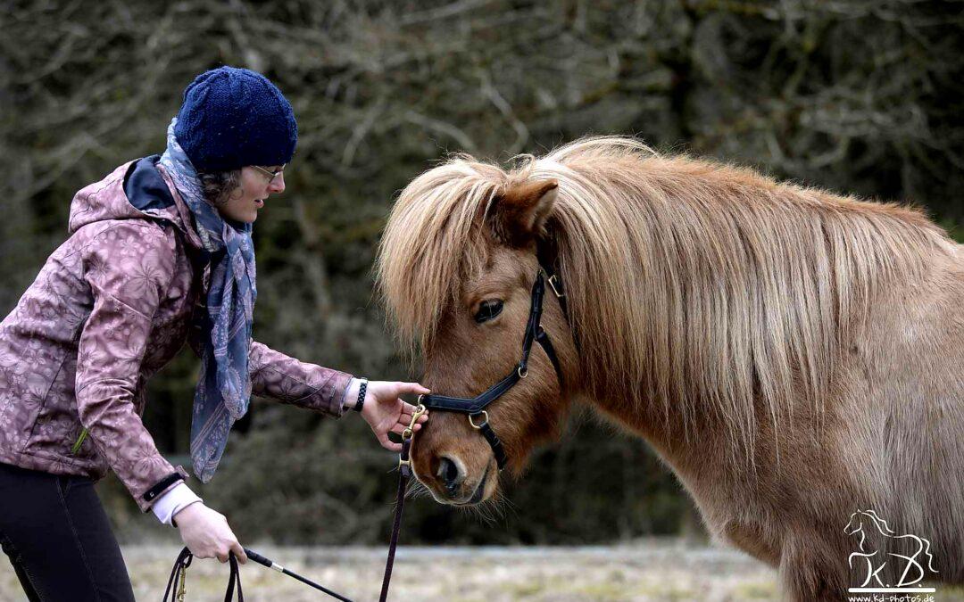 So erkennst du, ob dein Pferd korrekt gestellt ist.