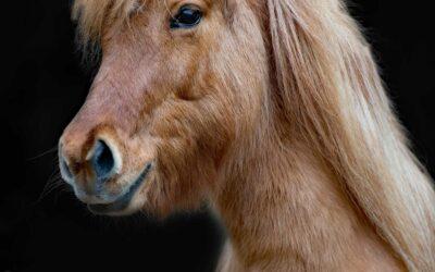 Was siehst du in deinem Pferd? Was sieht dein Pferd in dir?