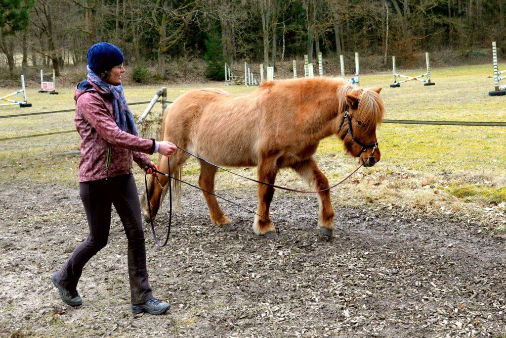 Das Pferd bewegt sich im Schritt an der Longe. Ich gehe geringer Entfernung mit.