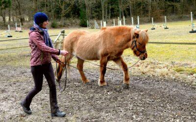 """Longieren lernen: Wenn dein Pferd nicht """"raus"""" geht"""