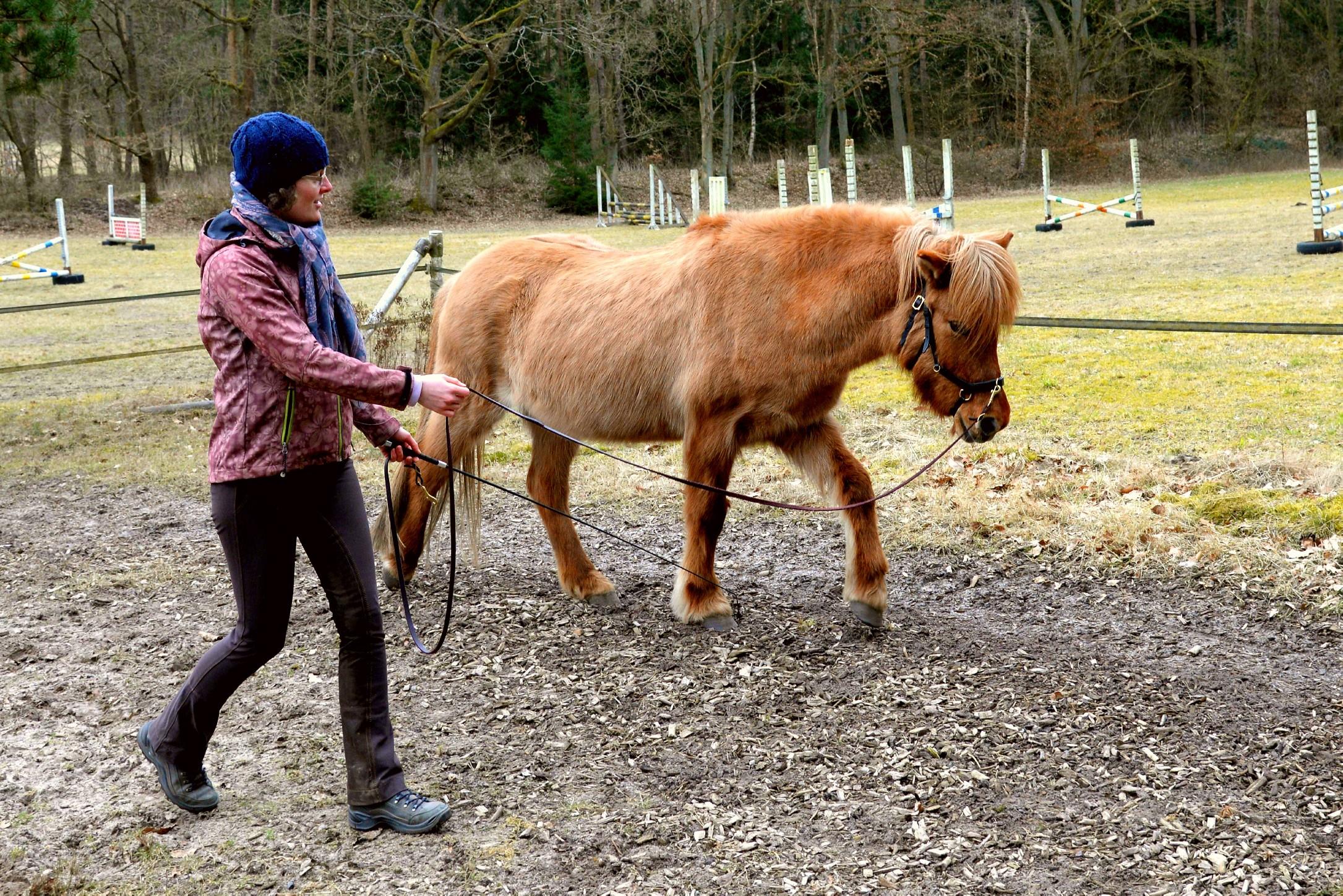 Pferd Lässt Sich Nicht Führen