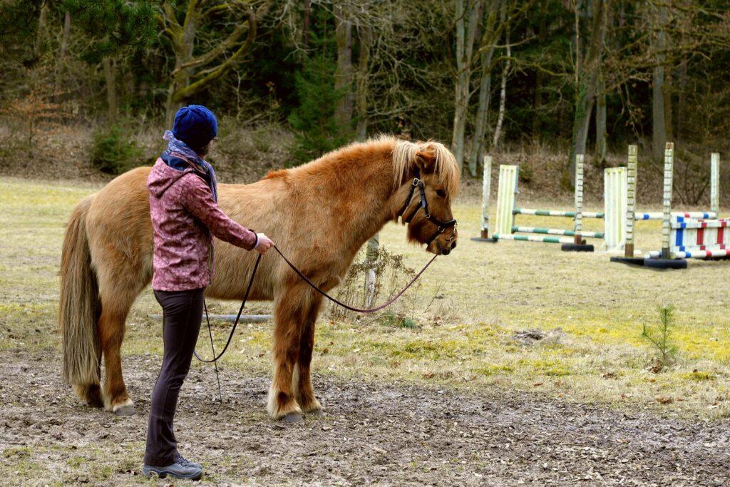 Das Pferd steht still und wartet, bis ich das Signal zum Losgehen gebe.