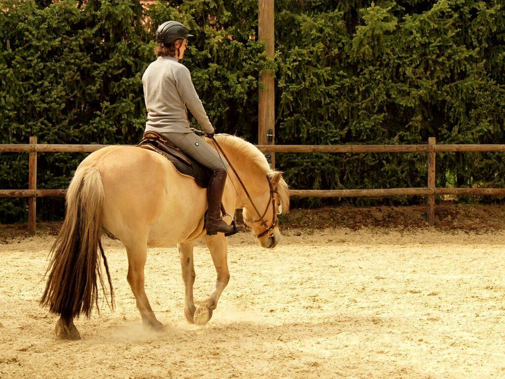 Auf diesem Foto reite ich auf einem Norweger mit breiter Brust. Er bringt mehr Stabilität mit als ein schmales Pferd.