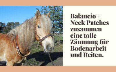 Balancio + Neck Patches – zusammen eine tolle Zäumung für Bodenarbeit und Reiten