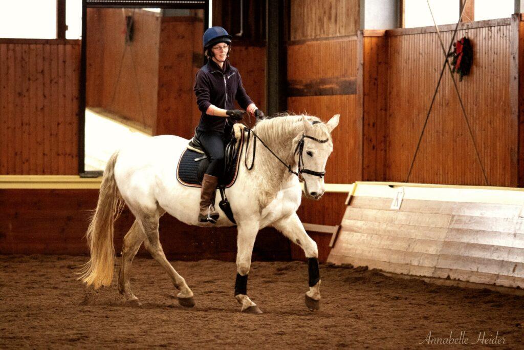 Das Pferd trabt im Arbeitstempo mit mittlerer Aufrichtung.