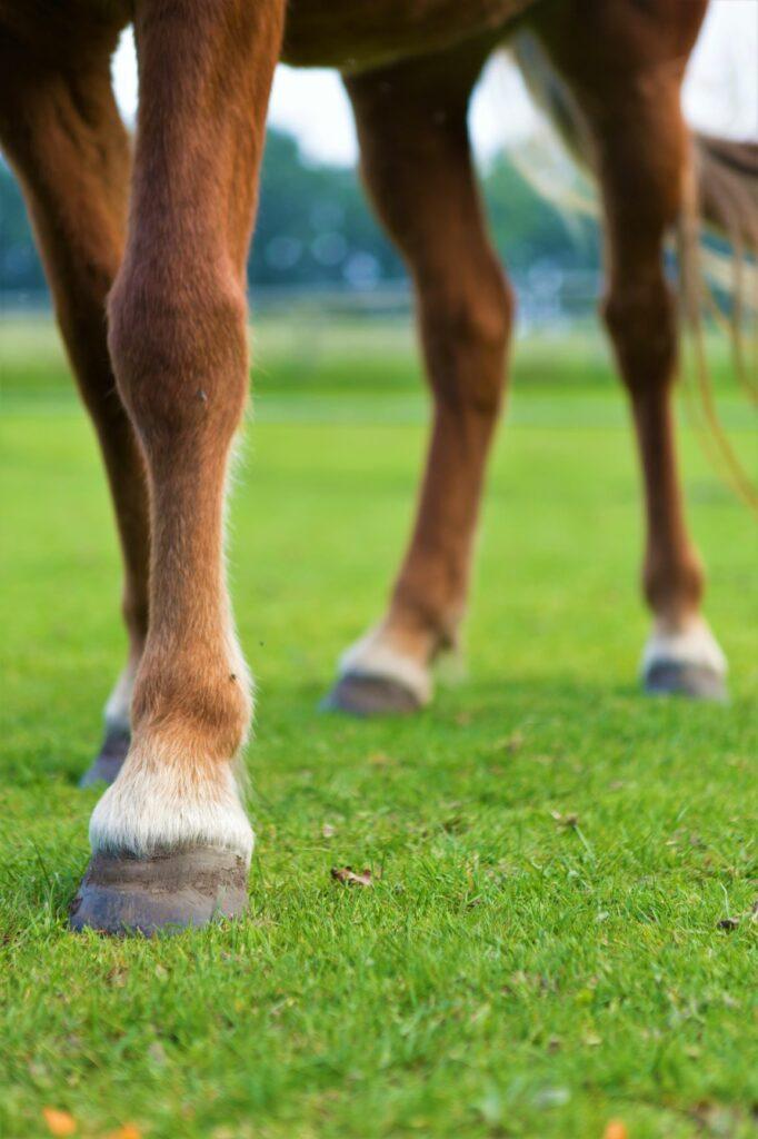 Auf diesem Foto sind vier Pferdebeine dargestellt, um zu verdeutlichen was das Ziel der geraderichtenden Arbeit ist.