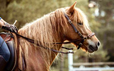 Ausrüstung für Pferd & Reiter – Empfehlungen für dich