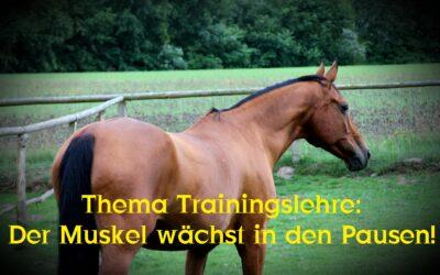 """Neu bei YouTube: """"Thema Trainingslehre des Pferdes: Der Muskel wächst in den Pausen!"""""""