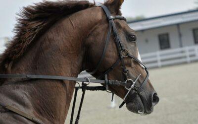 So erkennst du, ob du dein Pferd im Training überforderst